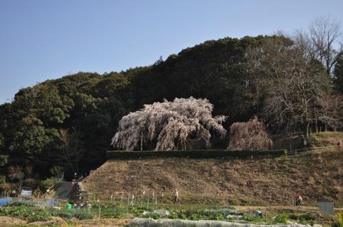 Okuyamada DSC 4115